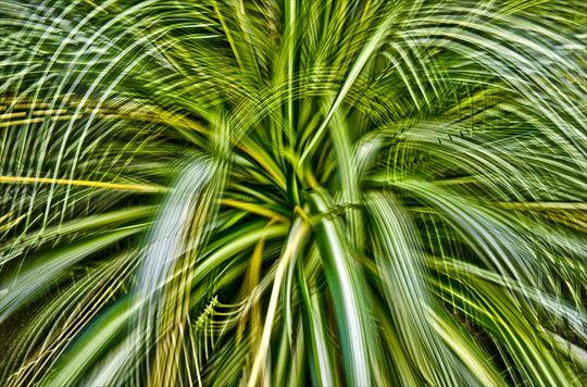 botanical 001_R